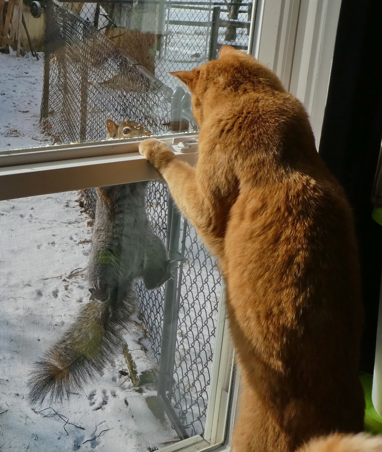 Standoff at the window (photo)