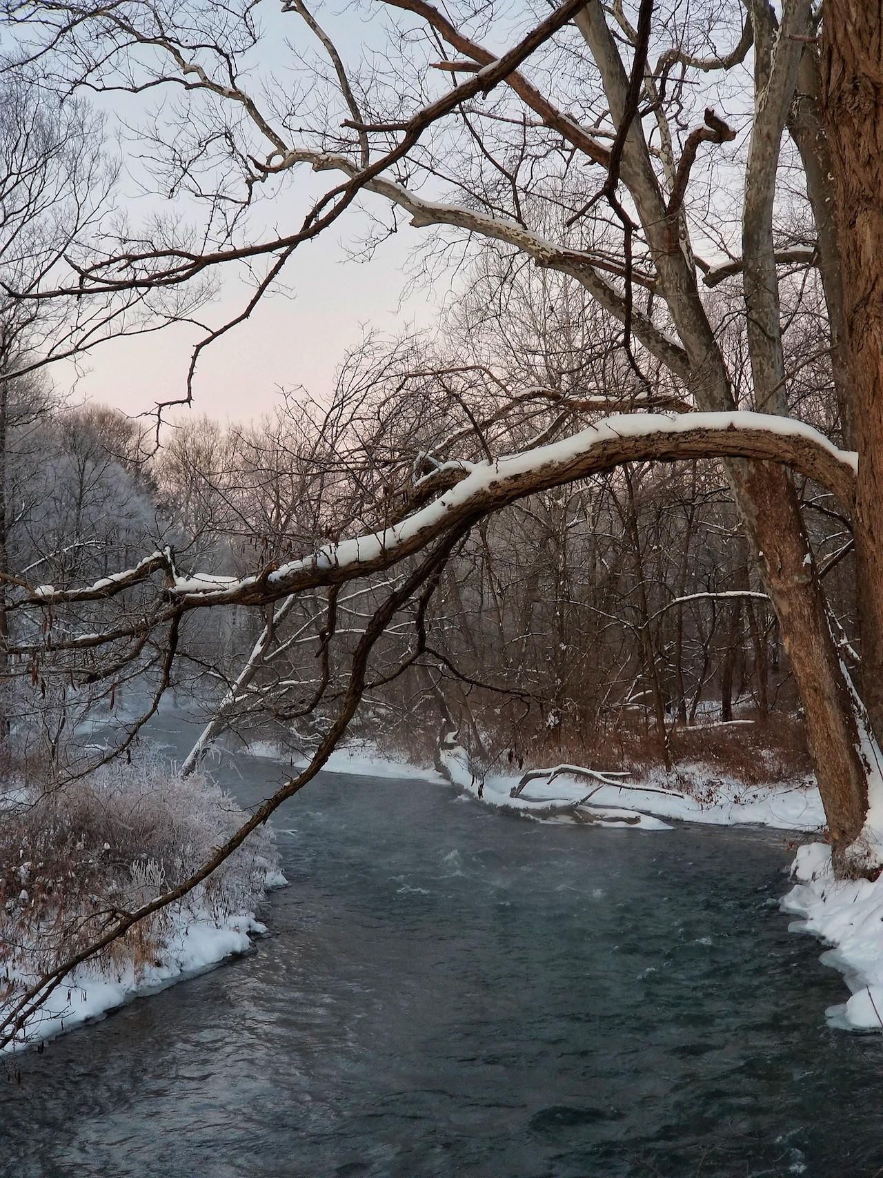 Snow capped trees flowing (photo)